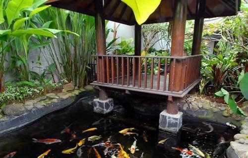 Kolam Ikan Minimalis Belakang Rumah