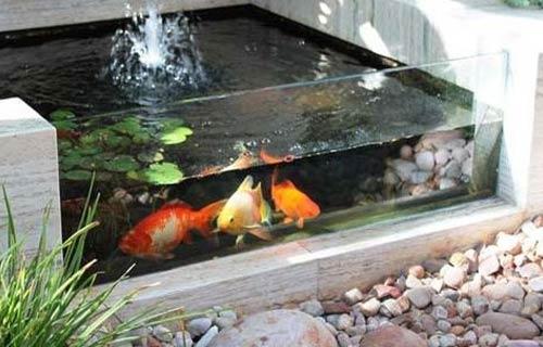 Kolam Ikan Minimalis Mini